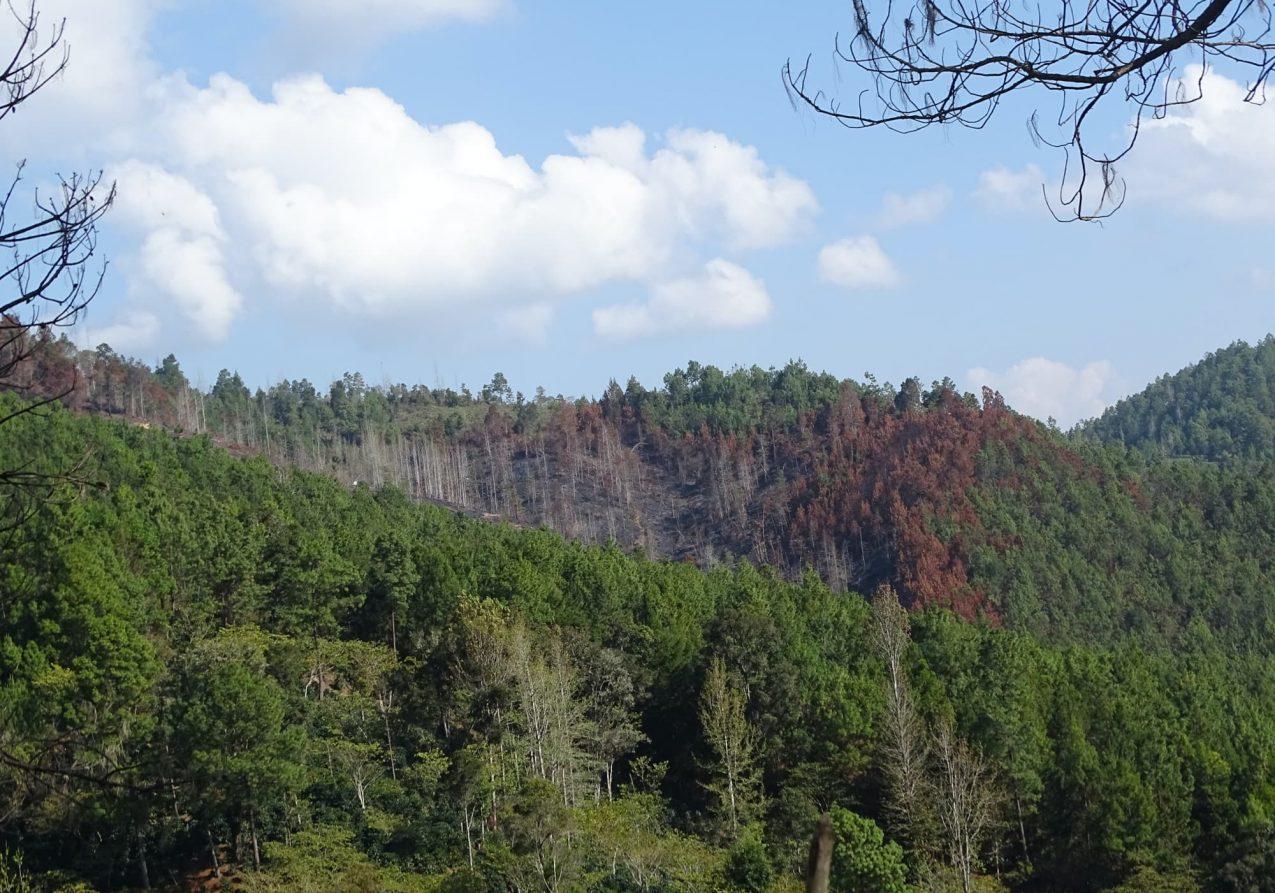 Bosque (2)-pichi